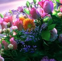 Beautiful_Flowers_HD_Desktop_Background_Wallpaper (1)